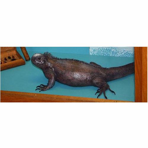 galapagosmarineiquana.jpg