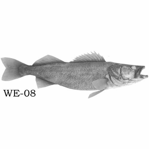 walleye-08.jpg