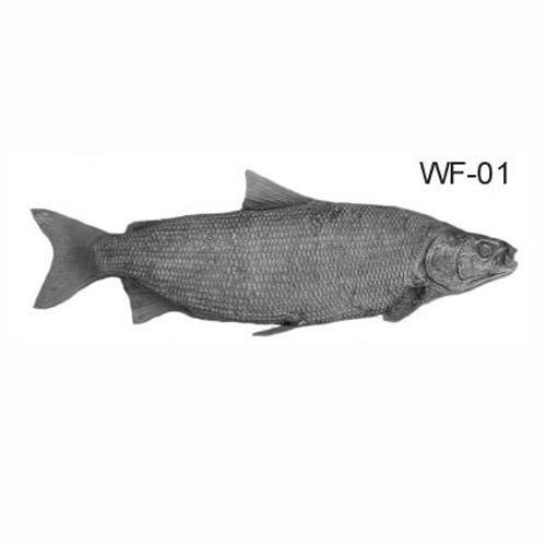 whitefish-01.jpg