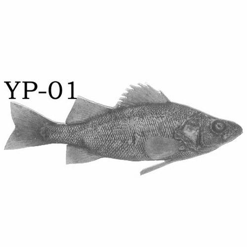 yellowperch-01.jpg