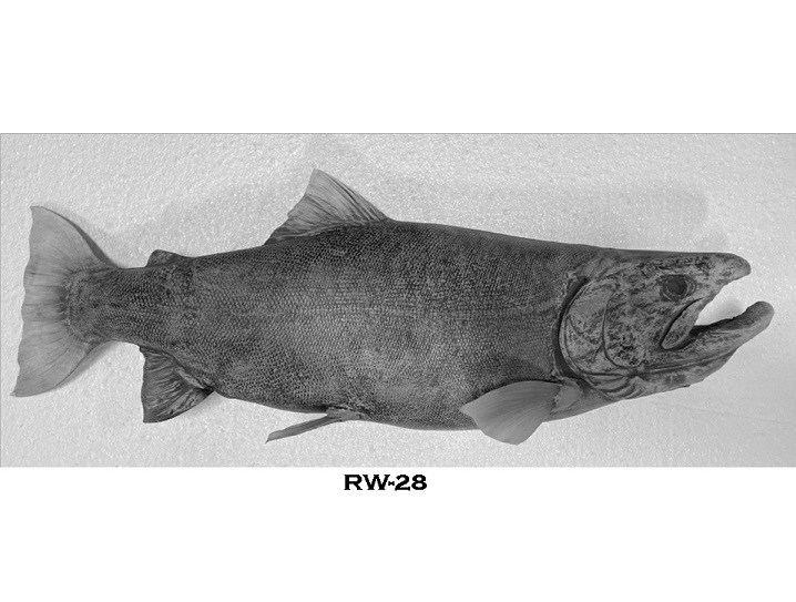 RW-28